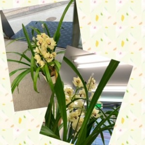 受付のお花