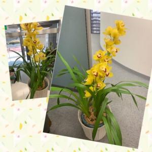 3月お花2